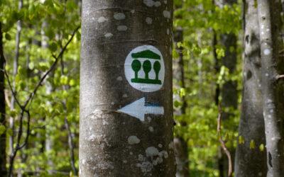 Otvoritev Pragozdne poti Krokar uvod v Teden gozdov 2021