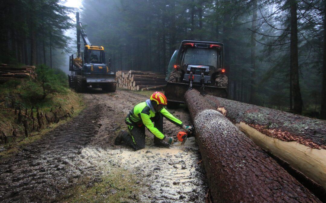 Družba Slovenski državni gozdovi d.o.o. danes praznuje  peto obletnico delovanja